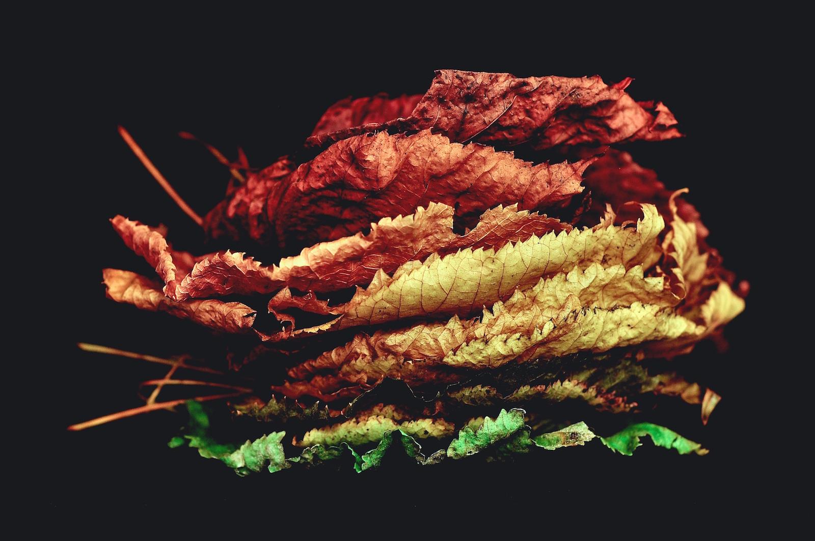 Mehrfarbige Blätter